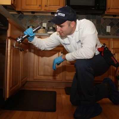 Eliminating Ant Invasions in Your Home!