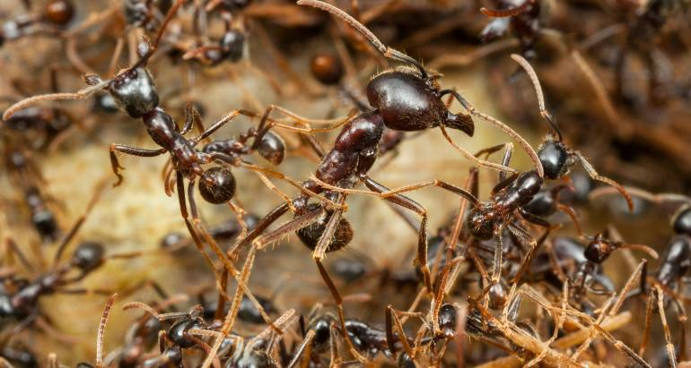 4 Types of Ants You Might See in the PNW