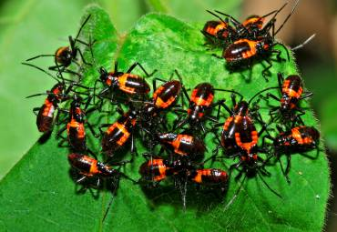 How to Keep Your Home Bug Free in Between Services
