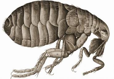 How to Get Rid of Fleas on Your Pet