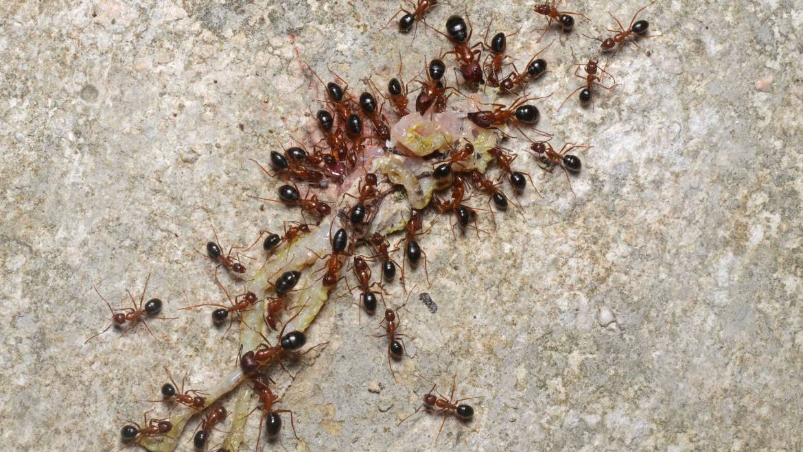 Pests You Will See in Your Home This Year