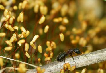 How to Get Rid of Moisture Ants