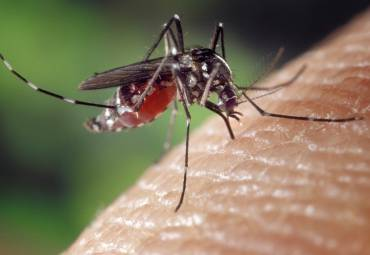 Easy Home Remedies for Mosquito Bites