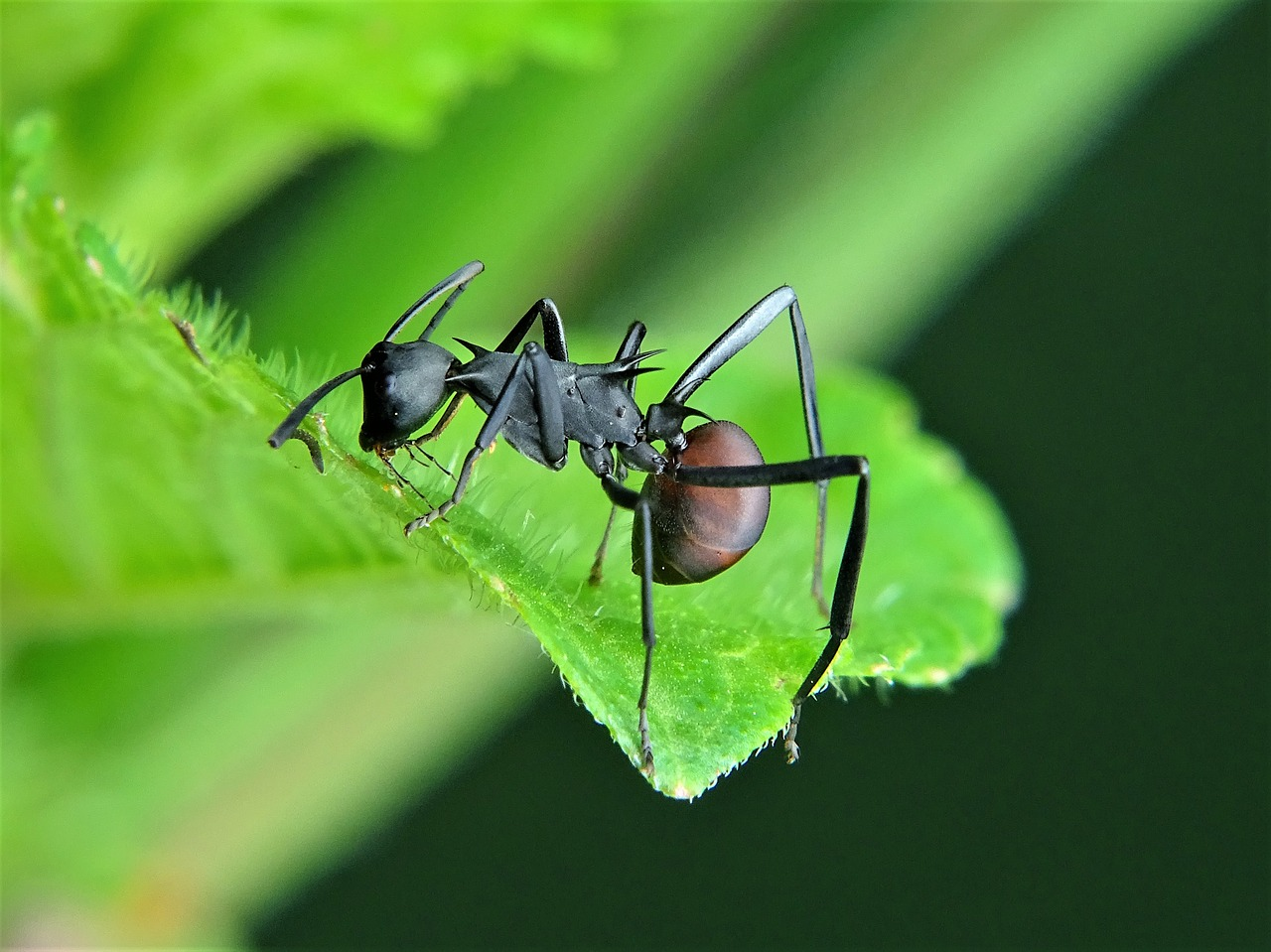 Carpenter Ant Exterminator