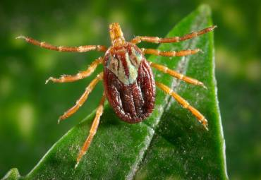 What to Do If a Tick Bites You
