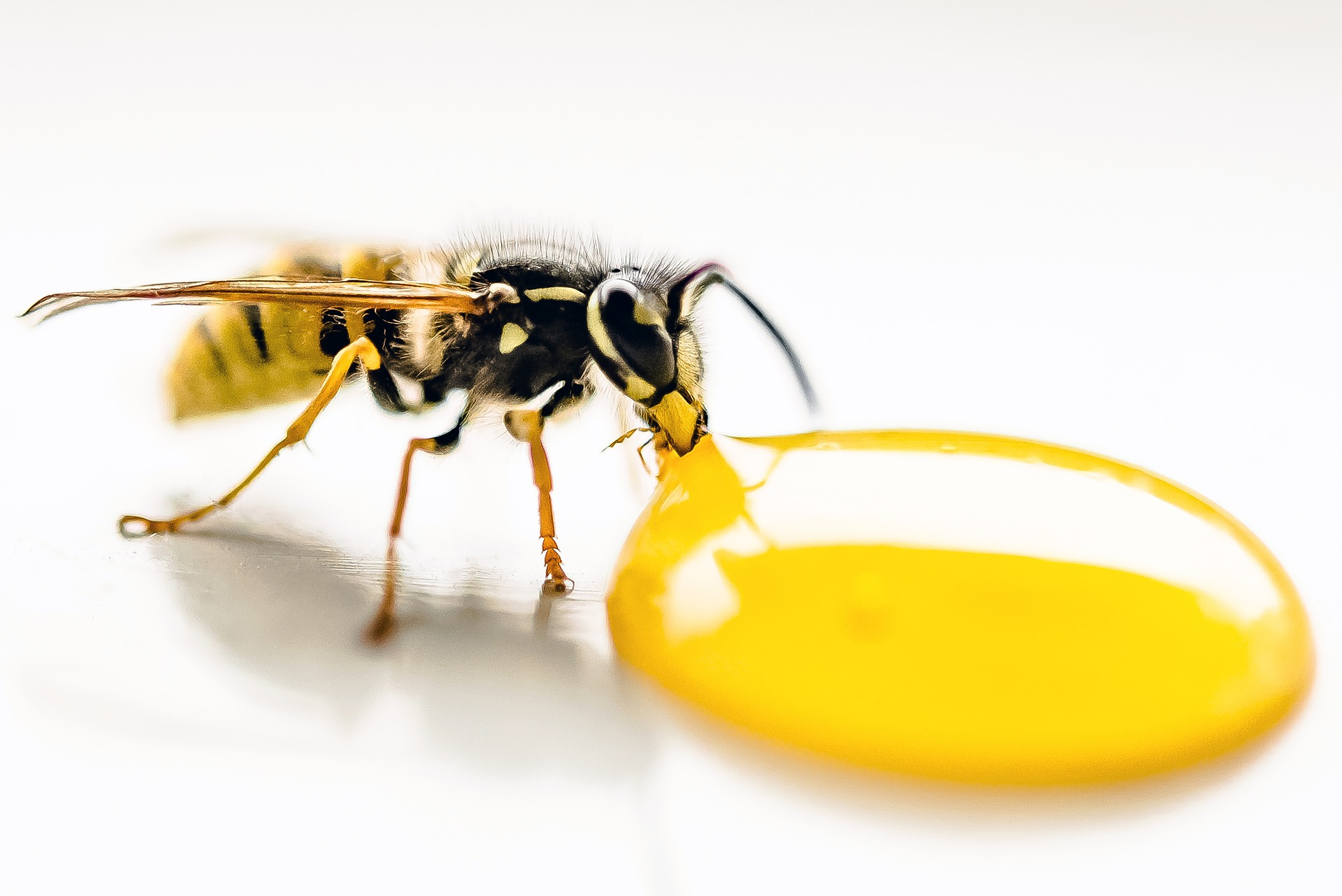 Prime 5 Tips On How To Treat A Wasp Sting Interior Design Ideas Tzicisoteloinfo